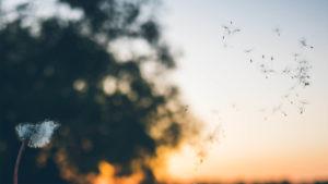 Ha tudunk szabadon érezni és vágyakozni, abból érték fakad